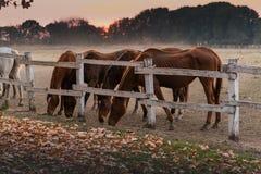 Bei cavalli nella natura fotografia stock libera da diritti