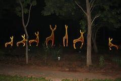 Bei cervi fatti con luce fra gli alberi Fotografia Stock