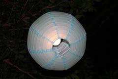Bei cervi fatti con luce fra gli alberi Immagini Stock Libere da Diritti
