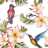 Bei colibri, fiori di plumeria e foglie di palma variopinti su fondo bianco Modello senza cuciture tropicale esotico illustrazione di stock