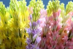 Bei colori dei fiori di plastica Fotografie Stock