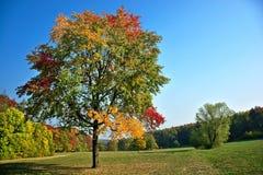 Bei colori dell'autunno immagine stock libera da diritti