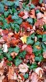 Bei colori dell'autunno Immagini Stock Libere da Diritti