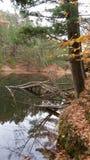 Bei colori di caduta Fotografia Stock Libera da Diritti