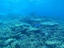 Bei coralli Immagine Stock Libera da Diritti