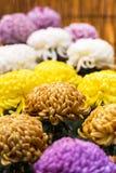 Bei crisantemi variopinti in un giardino giapponese chiuso Primo piano verticale Immagini Stock Libere da Diritti
