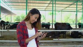 Bei donna o agricoltore che utilizzano telefono cellulare o smartphone app con e mucche nella stalla sulla latteria checoltiva ed stock footage