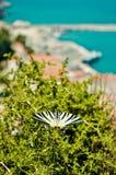Bei farfalla e porto di Karlovasi su fondo Immagine Stock Libera da Diritti