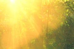 Bei fasci di sole nell'alto più forsest e vicino fotografie stock