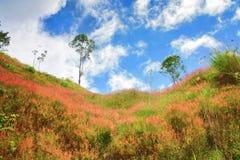 Bei fiore e cieli blu rosa dell'erba Fotografia Stock Libera da Diritti