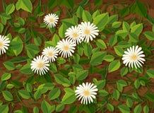 Bei fiore e foglie della camomilla illustrazione vettoriale