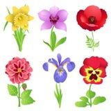 Bei fiori Immagini Stock Libere da Diritti