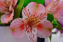 Bei fiori immagini stock