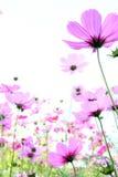 Bei fiori Fotografia Stock
