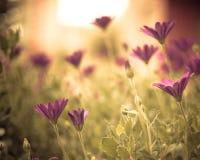 Bei fiori fotografie stock libere da diritti