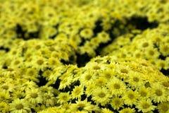 Bei fiori Immagine Stock