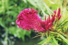 bei fiori adatti a piantatura nel giardino immagini stock