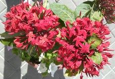 Bei fiori all'aperto di estate di HD Immagine Stock