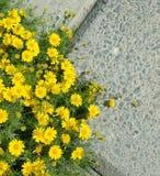 Bei fiori all'aperto di estate di HD Immagine Stock Libera da Diritti