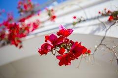 Bei fiori appassionati di estate fotografia stock libera da diritti