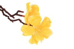 Bei fiori artificiali gialli Fotografia Stock Libera da Diritti
