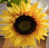 Bei fiori artificiali gialli del girasole sul tavolo da cucina Immagini Stock Libere da Diritti
