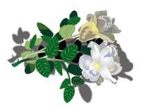 Bei fiori bianchi Immagine Stock Libera da Diritti