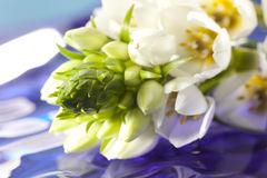 Bei fiori bianchi Immagini Stock Libere da Diritti