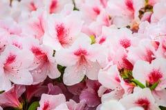 Bei fiori bianchi Fotografia Stock