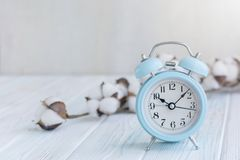 Bei fiori bianchi del cotone e sveglia blu sul fondo di legno del turchese Immagine Stock Libera da Diritti