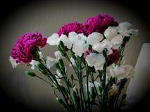 Bei fiori bianchi e porpora fotografia stock libera da diritti