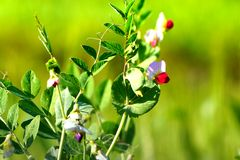 Bei fiori bianchi e verdi Fotografia Stock Libera da Diritti