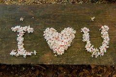 Bei fiori bianchi forma del cuore del ? del ? del flower? dell'albero del ?tung del ? del  immagini stock