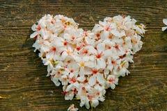 Bei fiori bianchi forma del cuore del ? del ? del flower? dell'albero del ?tung del ? del  immagine stock