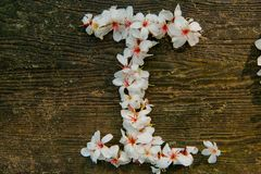 Bei fiori bianchi forma del cuore del ? del ? del flower? dell'albero del ?tung del ? del  immagine stock libera da diritti