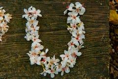 Bei fiori bianchi forma del cuore del ? del ? del flower? dell'albero del ?tung del ? del  fotografie stock libere da diritti