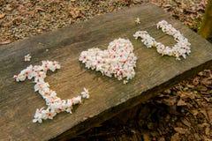 Bei fiori bianchi forma del cuore del ? del ? del flower? dell'albero del ?tung del ? del  fotografia stock libera da diritti