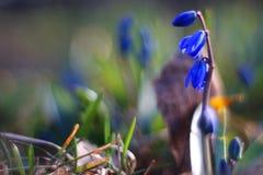 Bei fiori blu Immagini Stock Libere da Diritti