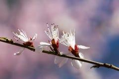 Bei fiori che fioriscono in primavera Fotografie Stock