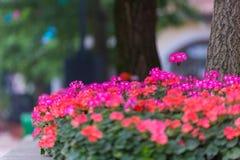 Bei fiori che fioriscono sul bordo della strada fotografie stock