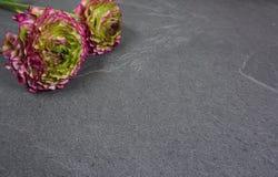 Bei fiori colorati del ranunculus su un fondo di legno grigio fotografia stock