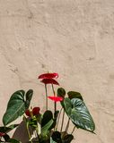 Bei fiori come fondo fotografia stock