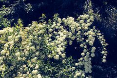 Bei fiori come fondo fotografie stock libere da diritti