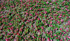 Bei fiori come fondo immagini stock