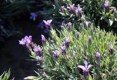 Bei fiori come fondo immagine stock libera da diritti