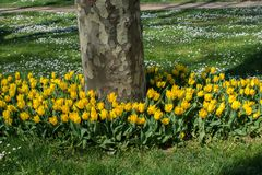 Bei fiori come fondo fotografie stock