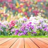 Bei fiori con il pavimento variopinto di legno e del bokeh Fotografie Stock