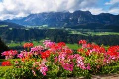 Bei fiori con la gamma di montagne di Dachstein nel fondo, Schladming, alpi Fotografia Stock