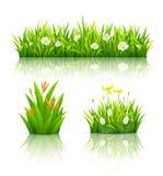 Bei fiori con le collezioni delle foglie verdi illustrazione vettoriale