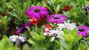 Bei fiori dei colori differenti nell'erba Fotografie Stock